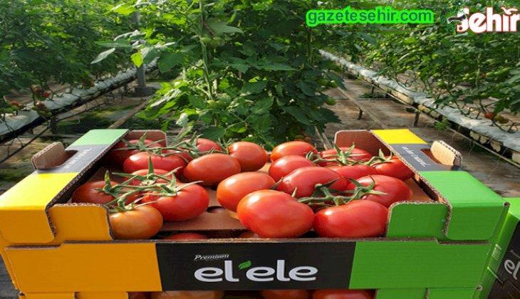 Rusya ya domates ihracatında ek  50 bin ton kapasite daha arttırıldı